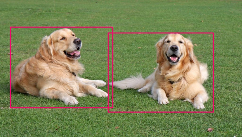Object Recognition for recognizing dogs in an image
