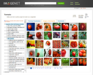 imagenet page for tomato
