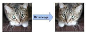 AlexNet Data Augmentation Mirror Image
