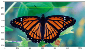 Detection of a butterfly in an image