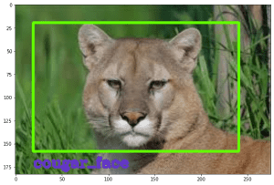 Detection of a cougar in an image