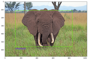 Detection of a elephant in an image