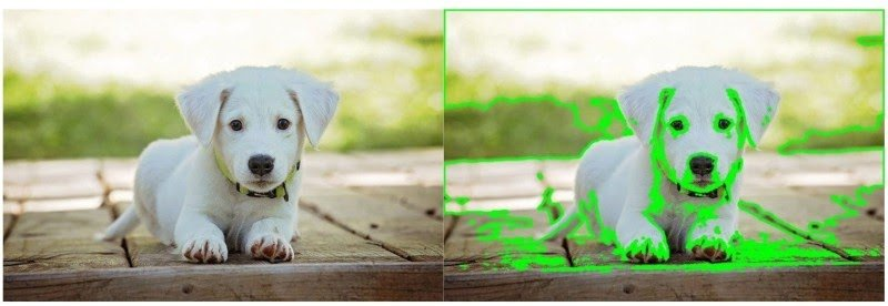 Comparative image visualizing a failure case. Image with a white puppy and background has lots of edges and clutter resulting in detection of multiple or incorrect contours due to clutter in the background.