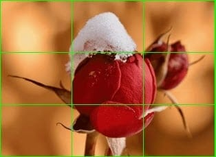 Figure showing the flower image after dividing it into patches.