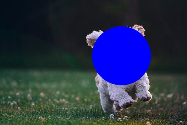 Output image, with a filled circle drawn over the face of the puppy.