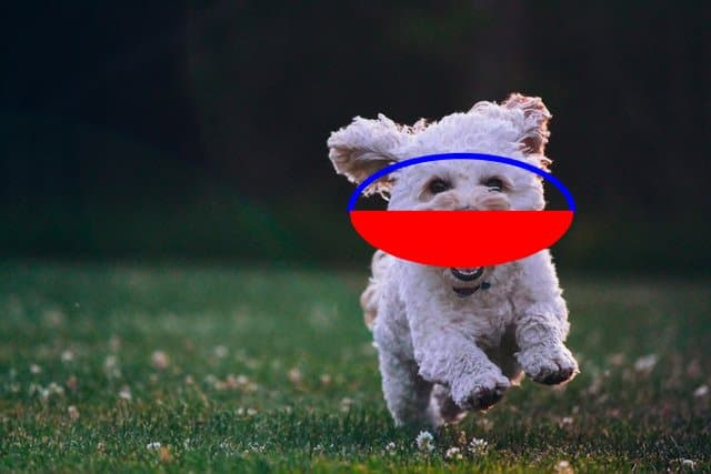 The output image with the first half ellipse of outline, and the second half is of a filled half ellipse, draw over the face of the puppy.