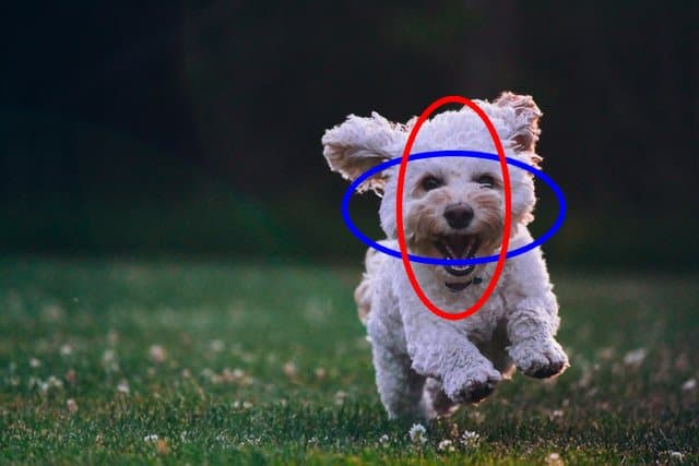 The output image with the two ellipses drawn on the face of the puppy.