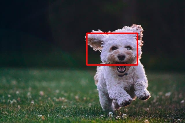 Image showing a red rectangle drawn over the face of the puppy.
