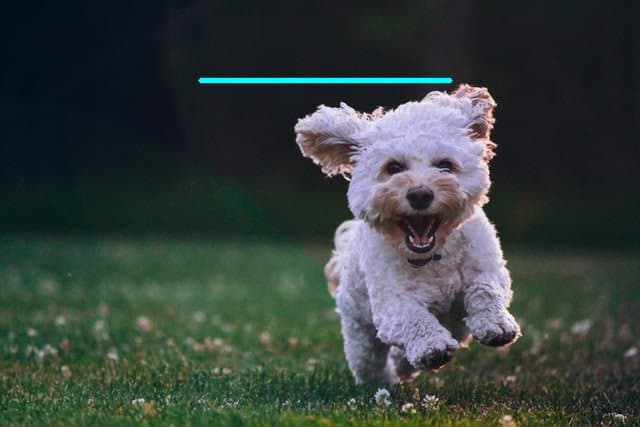 Output image of the puppy with the line drawn just above the head.