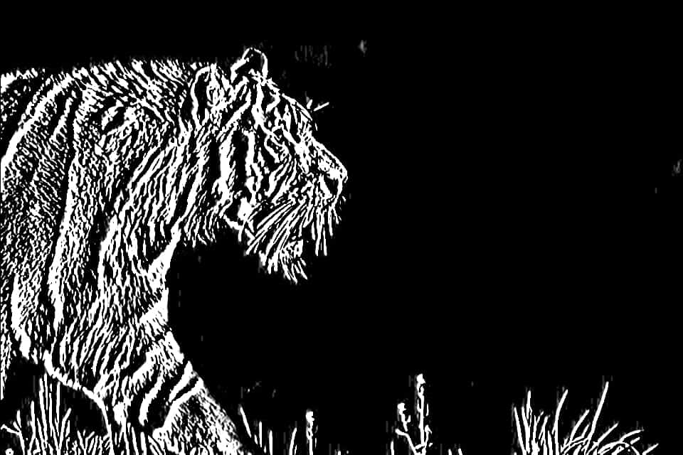Image obtained by Sobel Edge Detection, using X-kernel