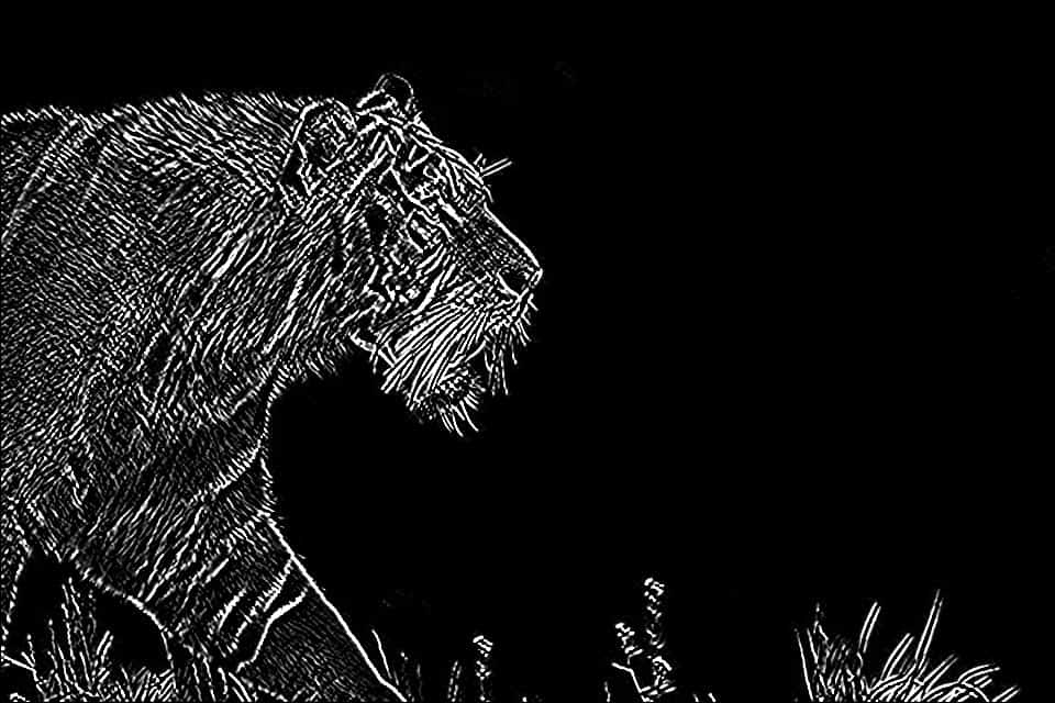 Image obtained by Sobel Edge Detection, using both the Kernels
