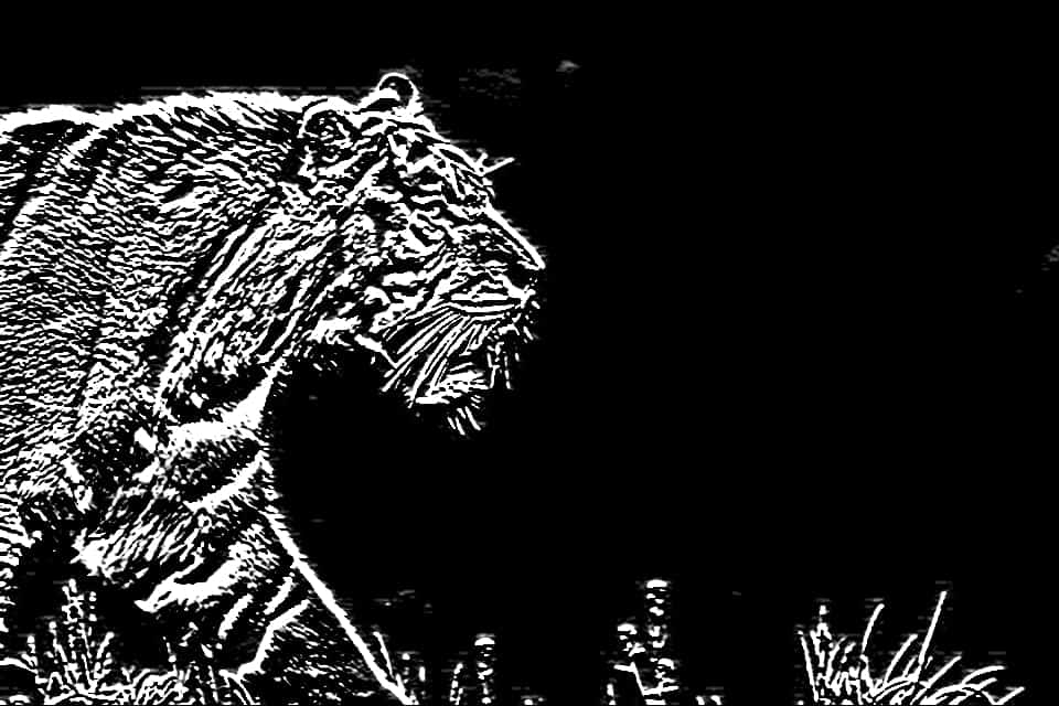 Image obtained by Sobel Edge Detection, using Y-kernel